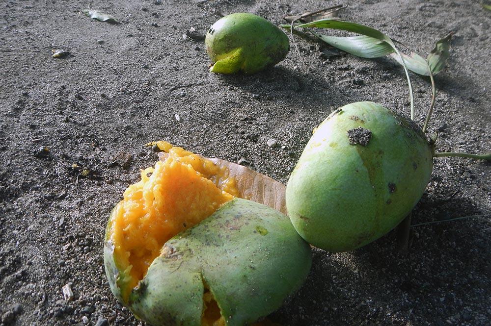 Нуса Пенида, манго