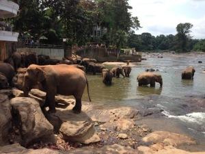 Бесплатное катание на слонах