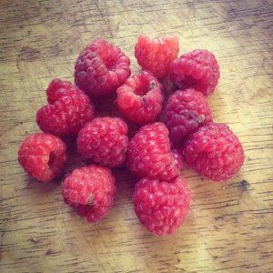 осенний урожай ягоды