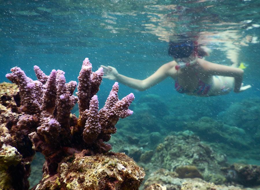 Подводный мир Бали