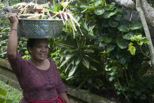 Кандидаса, Бали