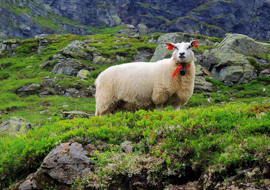 В Норвегию на машине