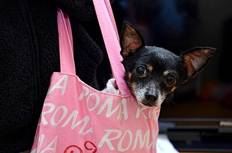 РИМ! Я ЛЮБЛЮ ТЕБЯ